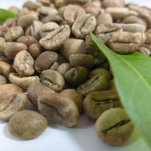 Cà phê nhân sống Robusta S18 1